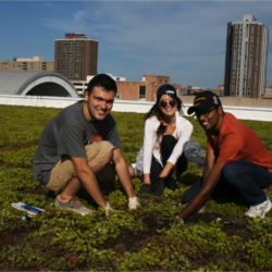 Image of Syracuse Center of Excellence Building Green Roof